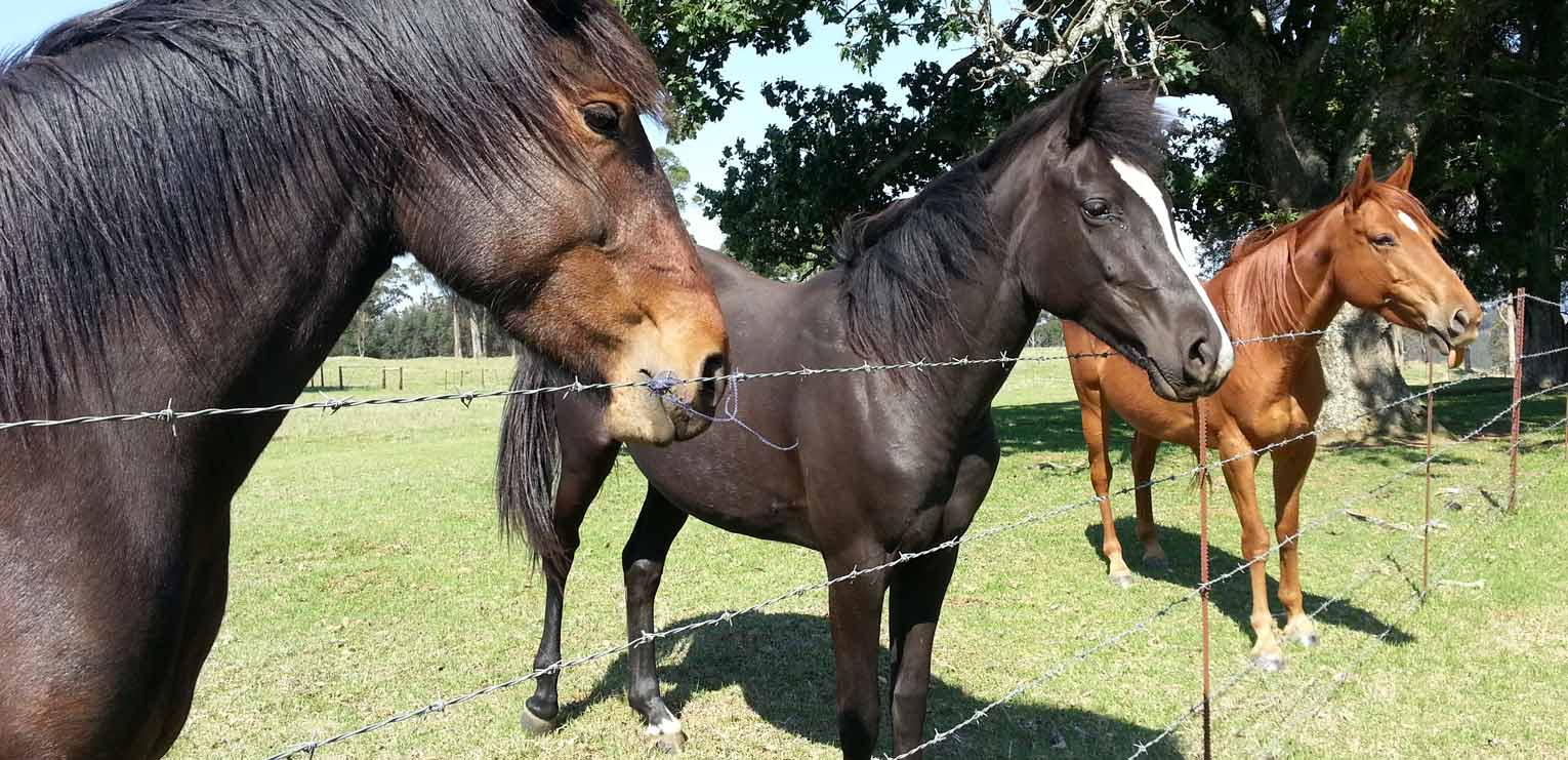 Our handsome horses